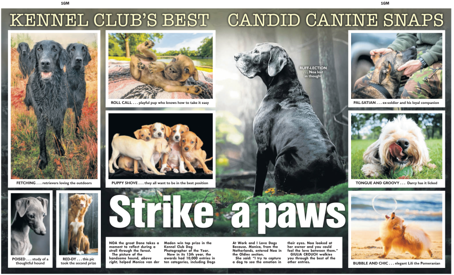 Kennel Club press cutting