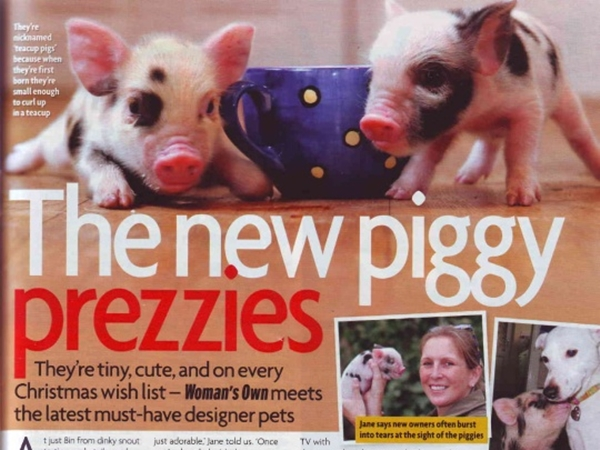 The New Piggy Prezzies